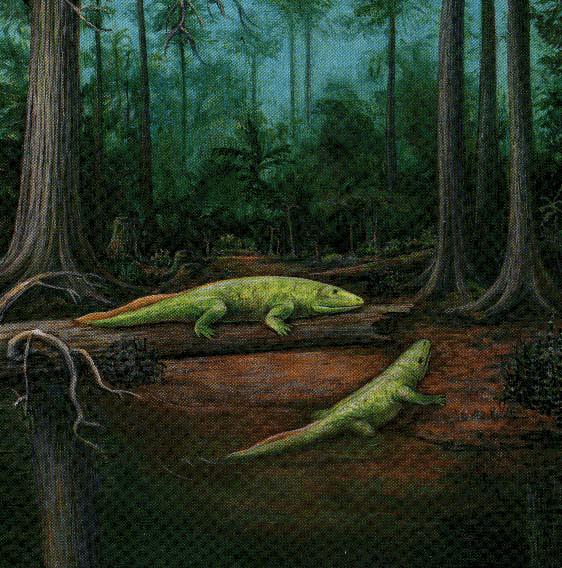 Devonian Amphibians Life in the devonian  r Devonian Amphibians